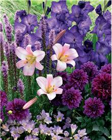 Collection 29 bulbes d'été