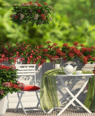 plantes fleurs pour balcon et terrasse achat vente plante et fleur willemse. Black Bedroom Furniture Sets. Home Design Ideas