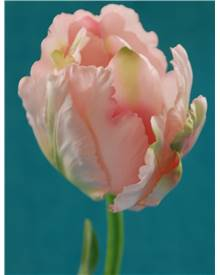 Tulipe pivoine artificielle rose