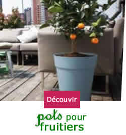 am nager un balcon en plein soleil ou expos au sud achat et vente plantes willemse. Black Bedroom Furniture Sets. Home Design Ideas