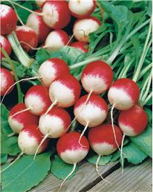 Collection 3 radis