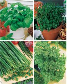 Collection 4 Plants Aromatique basilic, ciboulette, persil, thym