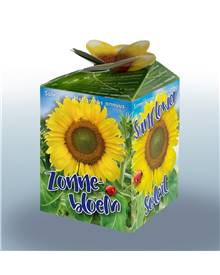 Kit Tournesol