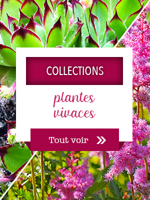 Collections de plantes vivaces