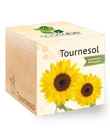 Kit Ecocube Tournesol