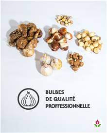 Collection 75 Bulbes terrasses et jardins