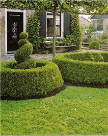 Buis buxus achat vente arbres et arbustes willemse for Willemse jardin