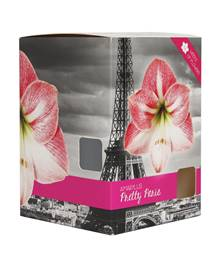 Amaryllis 'World Range Pretty Paris' rose et blanche