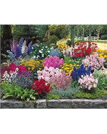 Pack 50 plantes vivaces assorties - Superficie environ 6 m²