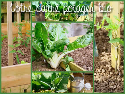 Carr potager bio moiti nord france achat vente graines l gumes for Achat carre potager