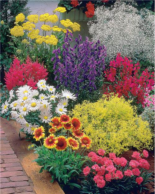 39 massif fleuri facile 39 8 plantes vivaces superficie for Catalogue plantes jardin