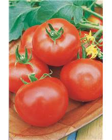 3 Plants Tomate Pyros F1