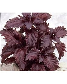 Basilic pourpre Purple Ruffles