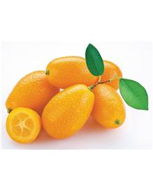Collection de 2 agrumes (1 kumquat + 1 citronnier)