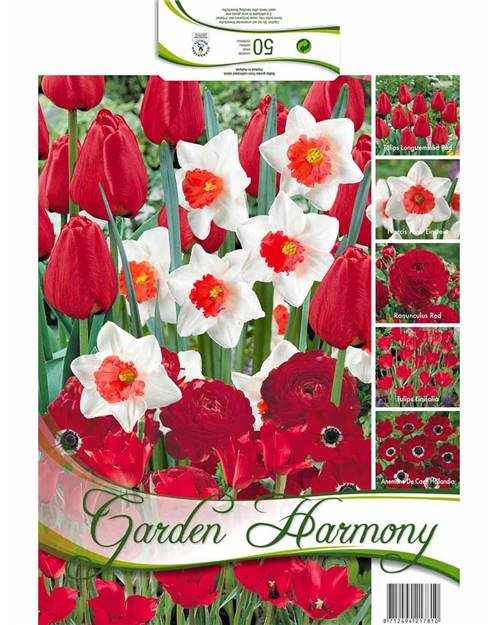 Collection 50 bulbes 'Garden Harmony' rouge