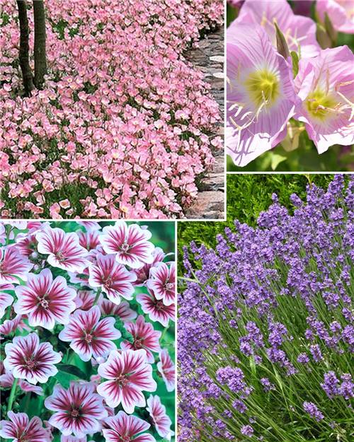 Collection de 8 plantes vivaces pastel pour massifs de jardin