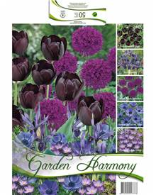 Collection 50 bulbes 'Garden Harmony' bleu nuit