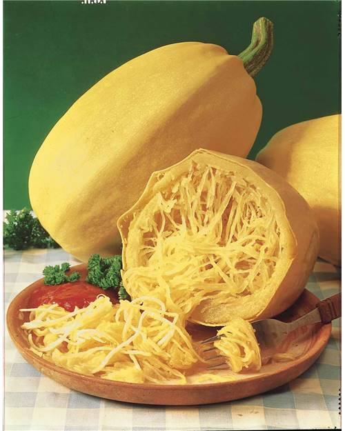 Courgette 39 spaghetti v g tal 39 willemse - Cuisiner courgette spaghetti ...