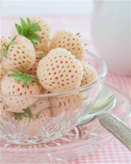 2 Fraisiers non remontants Pineberry White Dream ® en godets