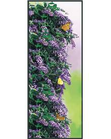 Arbre aux papillons 'Butterfly wall'