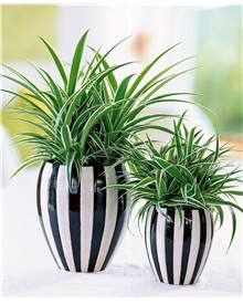 Pack 4 plantes interieur 1