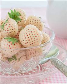 2 Fraisiers Pineberry 'White Dream' ®, la fraise ananas