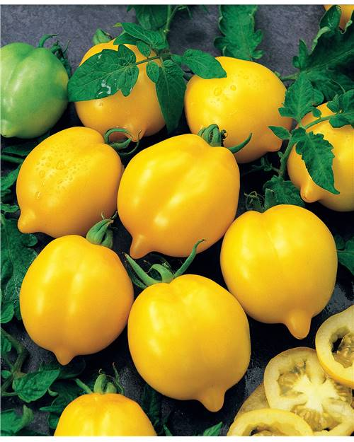 Tomate citron ('Lemon Tree')