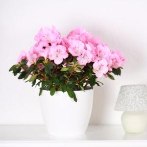 Am nager l 39 int rieur achat vente plantes willemse for Willemse fleurs