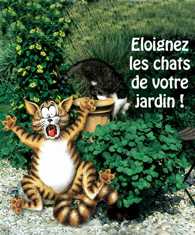 6 39 terreur des chats 39 willemse - Herbe a chat entretien ...