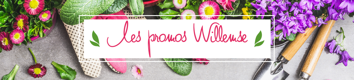 Les promotions Willemse