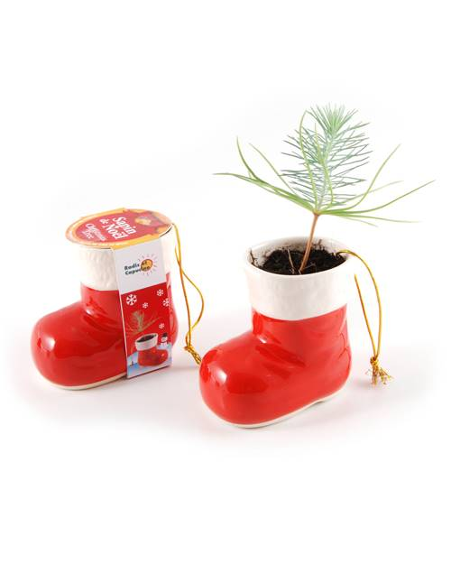 Kit Botte de Noel + graines pin sylvestre