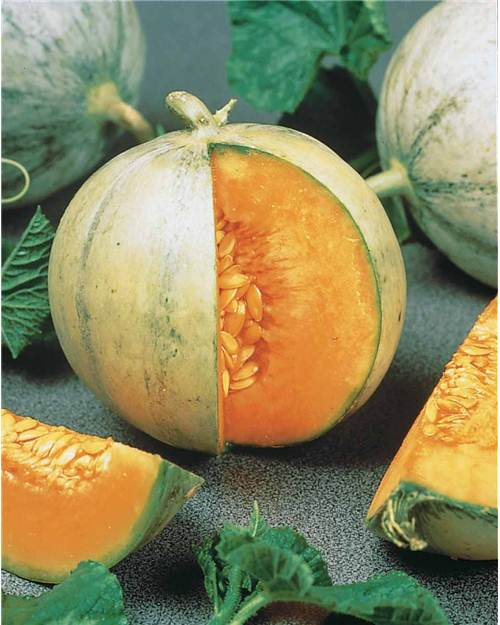 5 plants de Melon 'Sweetheart'
