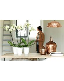 Cache pot Brussels Diamond Orchid D15 cm