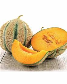 Melon Stellio F1 (Obt. Clause)