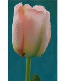 Tulipe rose artificielle