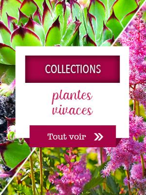 Collections plantes vivaces