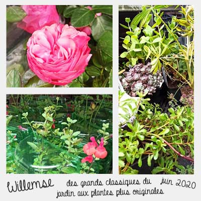 plantes originales Willemse