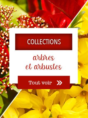 Collections arbres et arbustes