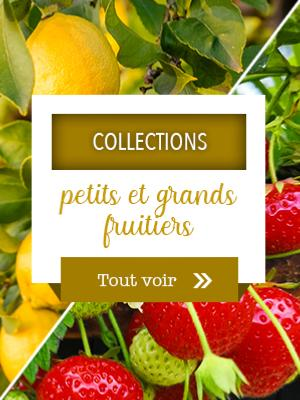 Collections petits et grands fruitiers